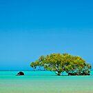 Mangrove Tree by aabzimaging