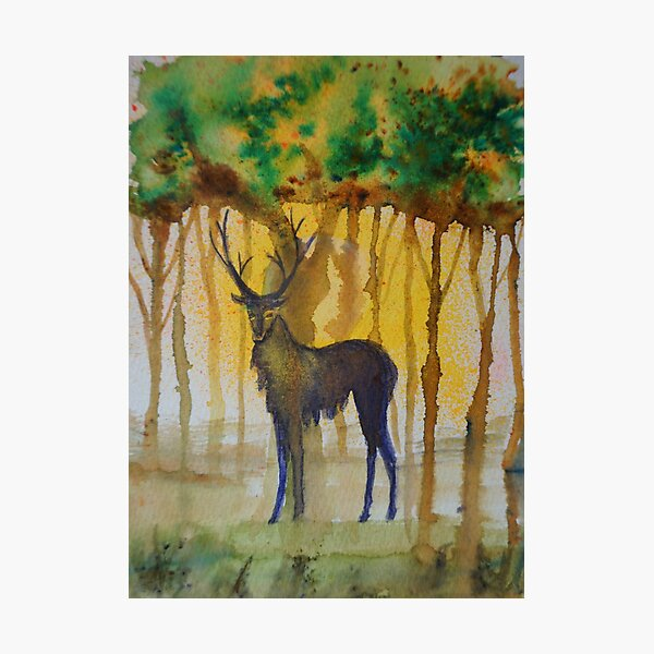 Stag at Sunset Photographic Print