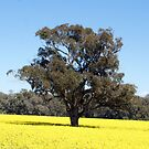 Canola & Country 2010 - 75 by Sharon Robertson