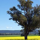 Canola & Country 2010 - 76 by Sharon Robertson
