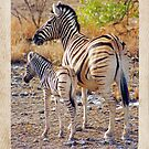 Mother and Baby Zebra - Happy Mother's Day by Jennifer Sumpton