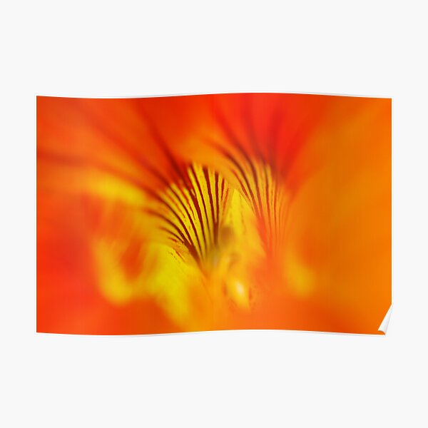 Flower abstract Poster
