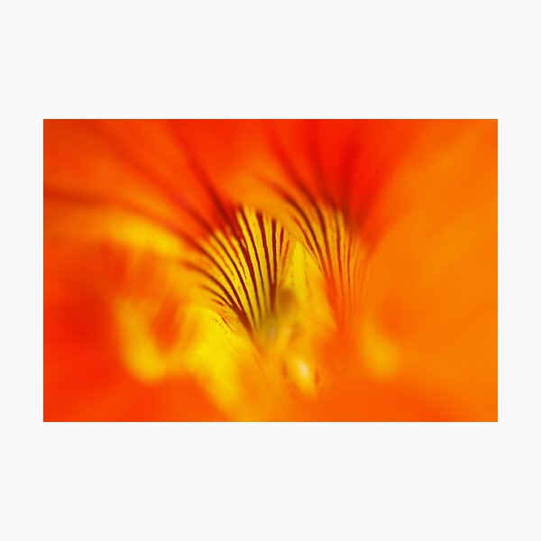 Flower abstract Photographic Print