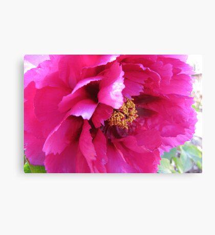 Ruffled pink petals Canvas Print