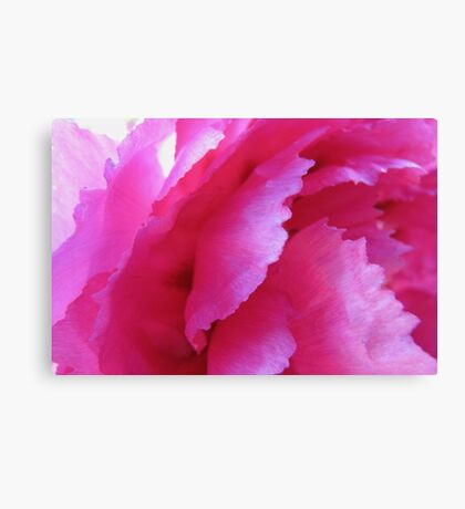 Ruffled layers of pink lace Canvas Print
