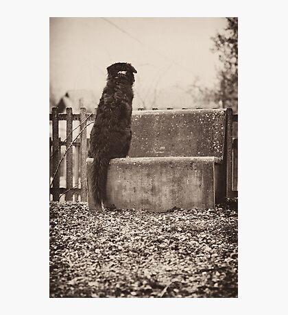 Monkey Tail Photographic Print