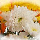Flowers by gazmercer