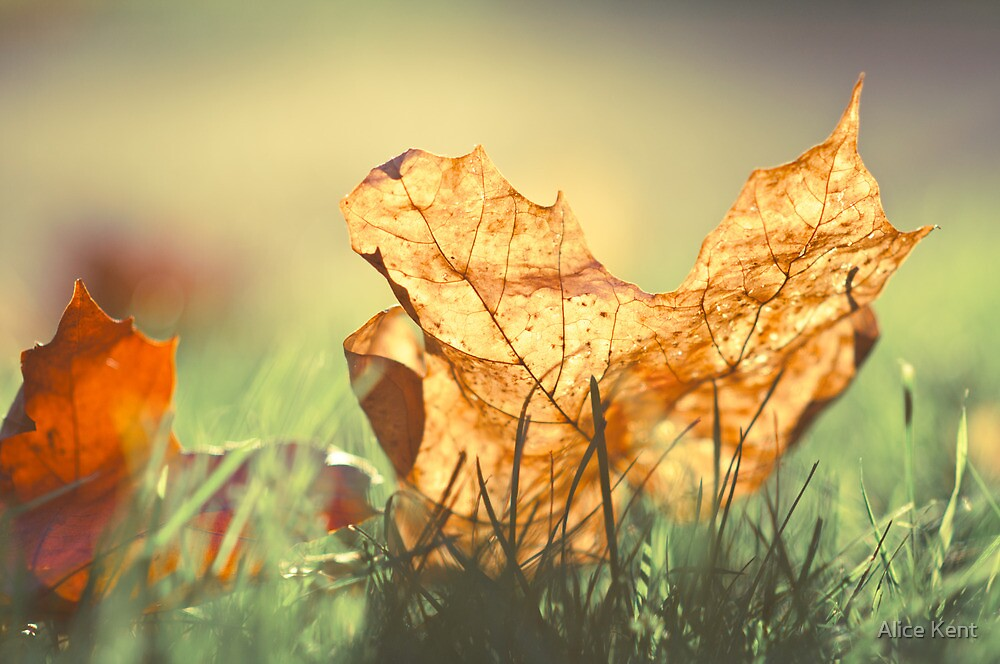 Autumn light by Alice Kent