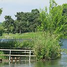 Sitting Ducks - Thornton Reservoir, Leicestershire, UK by cookieshotz