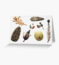 Natural objects - Autumn leaves, fir cones and fruit. Greeting Card