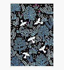 white birds garden Photographic Print