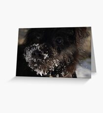 Russell in the snow Greeting Card