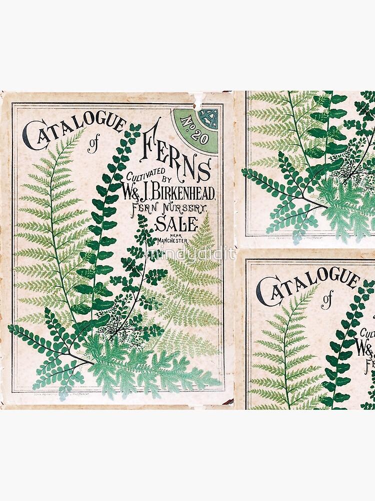 Vintage Botanical Ferns  by mindydidit