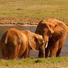 Two together! by vasu