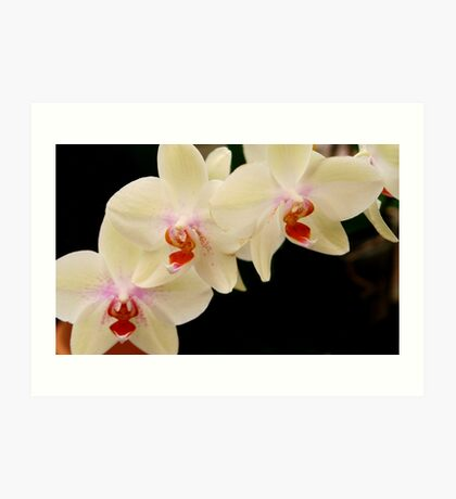 Orchids at Selby Art Print