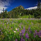 Mountain Flowers by Jonicool
