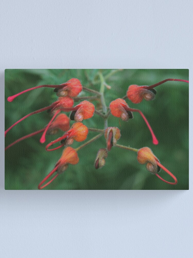 Alternate view of Grevillea batrachioides Canvas Print