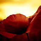 Golden Glow Poppie by Karen Havenaar