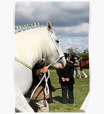 White Shire Winner Poster