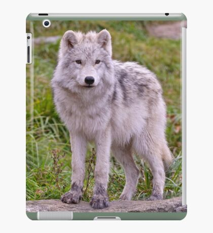 They're Growing - Arctic Wolf Pups  iPad Case/Skin