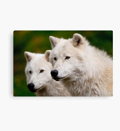 Arctic Wolf Pair Canvas Print