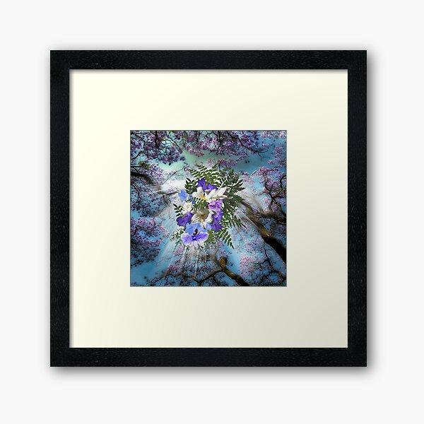 Jacaranda Blooms  Framed Art Print