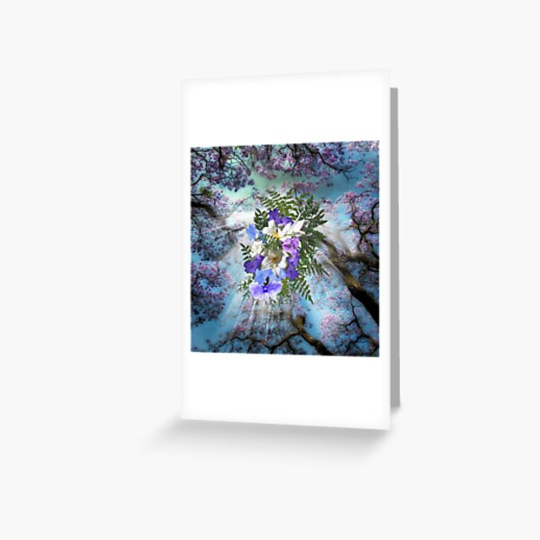 Jacaranda Blooms  Greeting Card