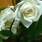 White Rose #1 by Trevor Kersley