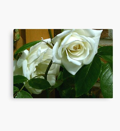 White Rose #1 Canvas Print