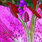 Fractalius Flower by Trevor Kersley