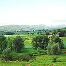 Northumberland landscape by Ian Lyall