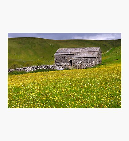 Summer meadow - The Yorkshire Dales Photographic Print