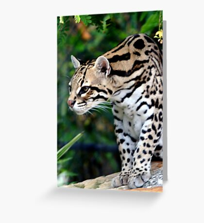 Ocelot at Naples Zoo Greeting Card