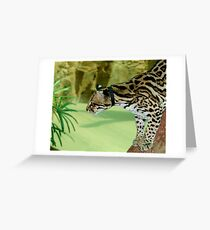 Ocelot at Naples Zoo 2 Greeting Card