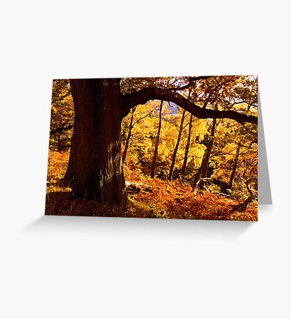Autumn colours near Ullswater - The Lake District Greeting Card