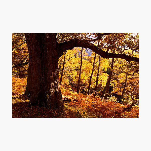 Autumn colours near Ullswater - The Lake District Photographic Print