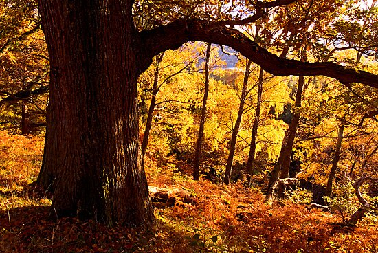 Autumn colours near Ullswater - The Lake District by Dave Lawrance
