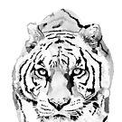 Tiger by christinahewson