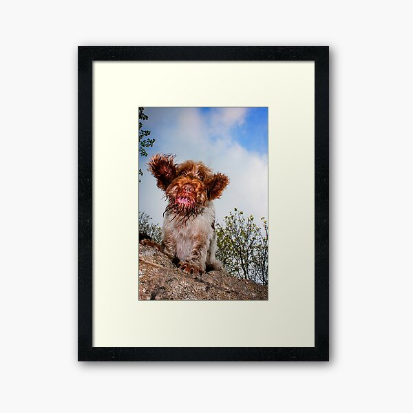 Hello down there! Spinone Framed Art Print