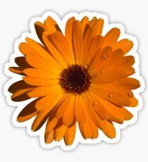 Orange power flower Sticker