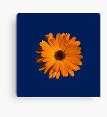 Orange power flower Canvas Print