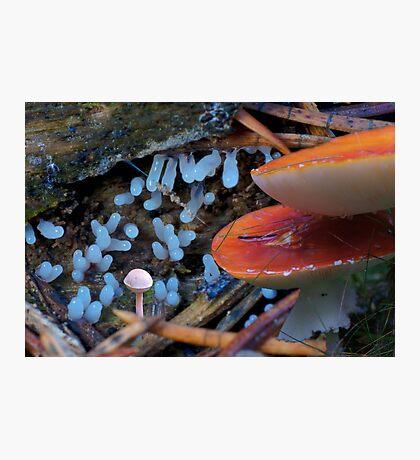 RedBlueWhite Fungi Fantasy Photographic Print