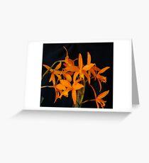 Laeliocattleya (Lc. ) Volcano Sunset Greeting Card