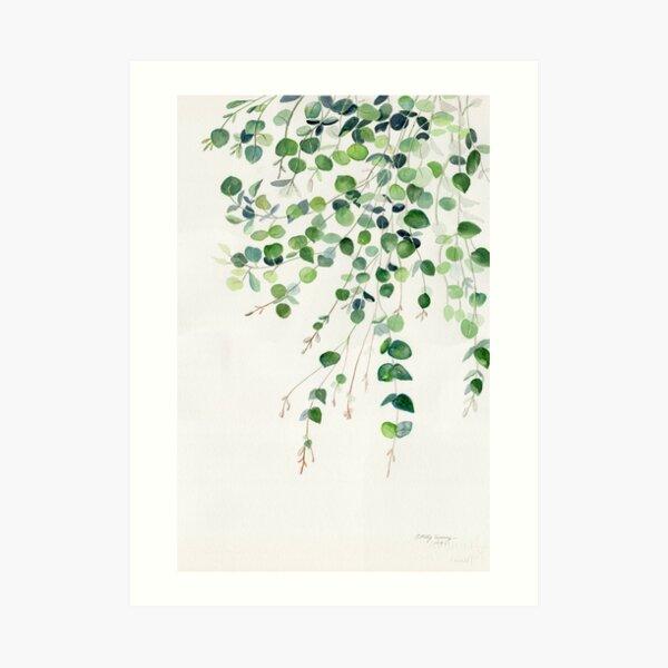 Acuarela de eucalipto Lámina artística