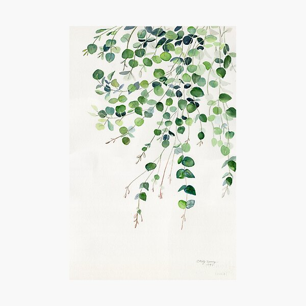 Eucalyptus Watercolor Photographic Print