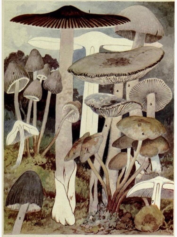 Vintage Mushroom Illustration by bluespecsstudio