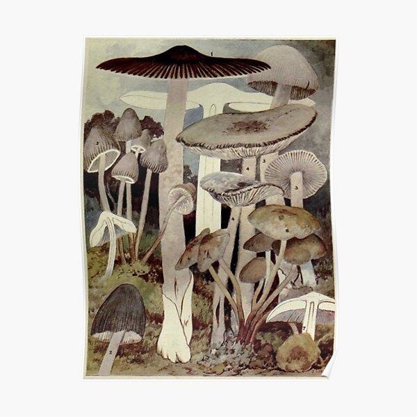 Vintage Mushroom Illustration Poster