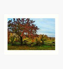 APPLE TREE & SPLIT RAIL FENCE Art Print