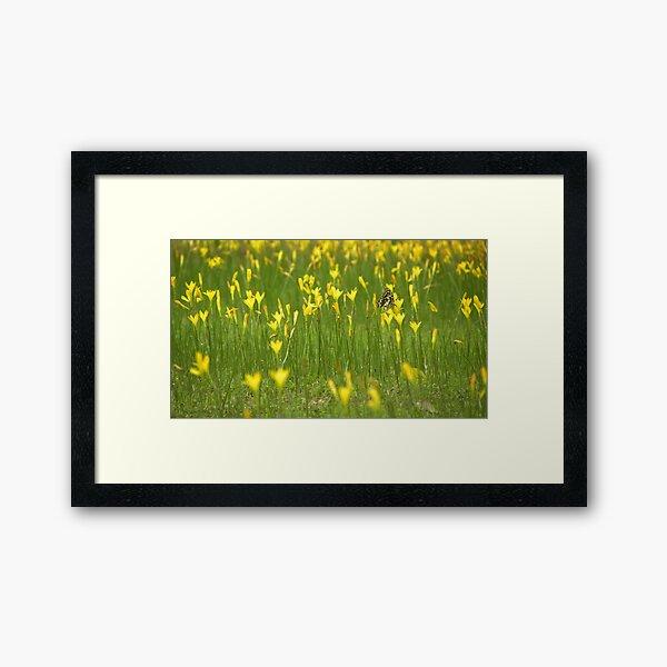 Color Fly Framed Art Print