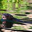Giant Otter by Stuart Robertson Reynolds